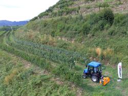 schlegelmulcher mit hammerschlegel für traktoren wie z b kubota iseki yanmar 120 cm mod lince 120